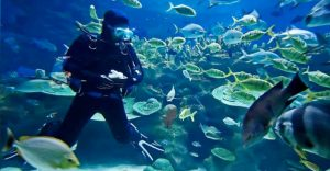 Dive courses for diving in New Zealand